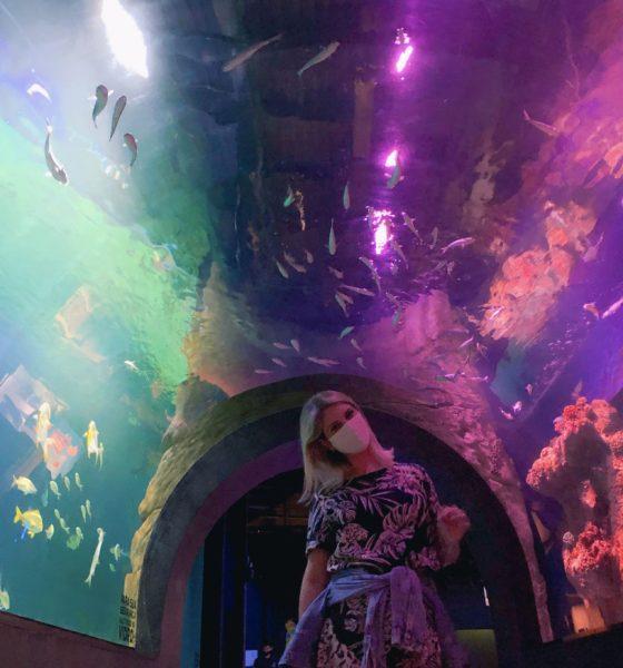 Uma visita ao Oceanic Aquarium em Balneário Camboriú